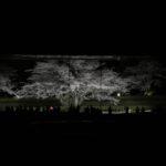2019/04/06 19:05 サクラ屏風-国立歴史博物館-佐倉