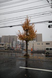 2016/11/24 9:37 アスファルト路面は濡れてて、積もりそうにはないですね。