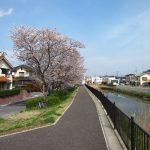 2012/04/13 13:56 ここぞとばかりに佐倉の桜を撮る 高崎川城南橋にて