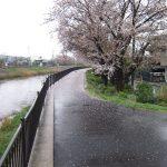 2012/04/14 15:50 佐倉市高崎川の桜並木は雨が降っても絵になるなぁ